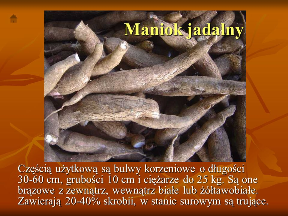 Maniok jadalny