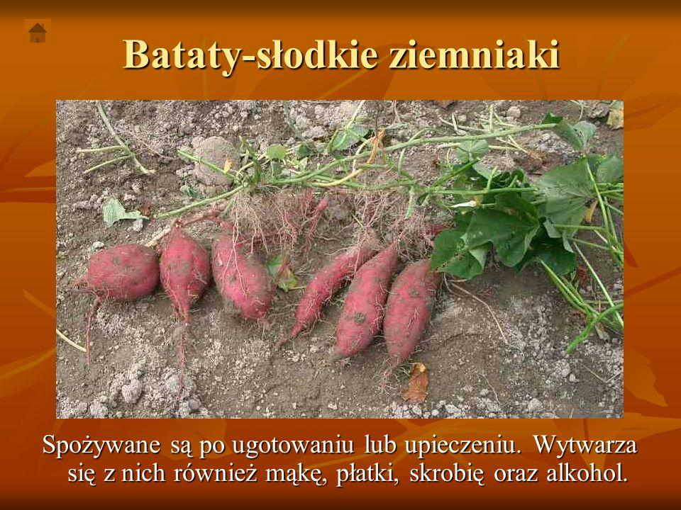 Bataty-słodkie ziemniaki