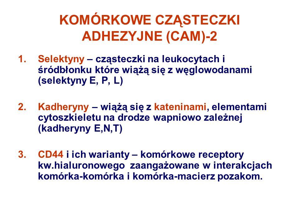 KOMÓRKOWE CZĄSTECZKI ADHEZYJNE (CAM)-2