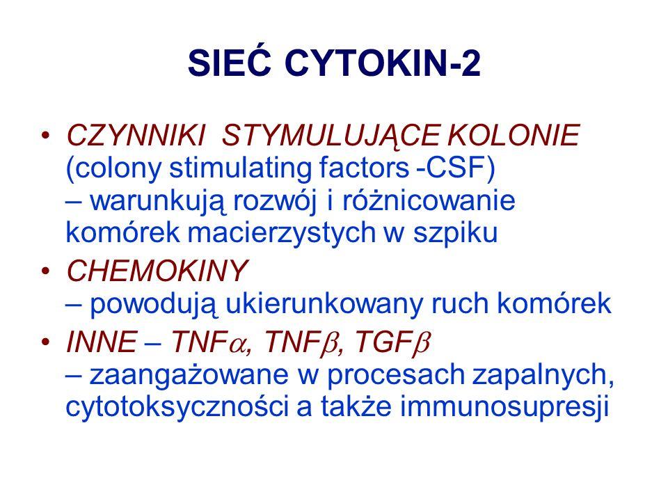SIEĆ CYTOKIN-2 CZYNNIKI STYMULUJĄCE KOLONIE (colony stimulating factors -CSF) – warunkują rozwój i różnicowanie komórek macierzystych w szpiku.