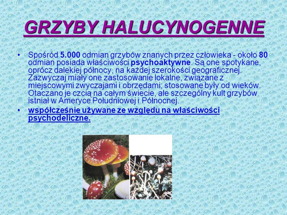 GRZYBY HALUCYNOGENNE
