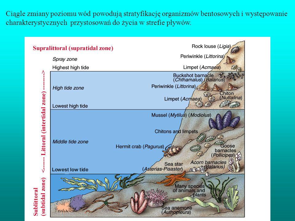 Ciągle zmiany poziomu wód powodują stratyfikację organizmów bentosowych i występowanie