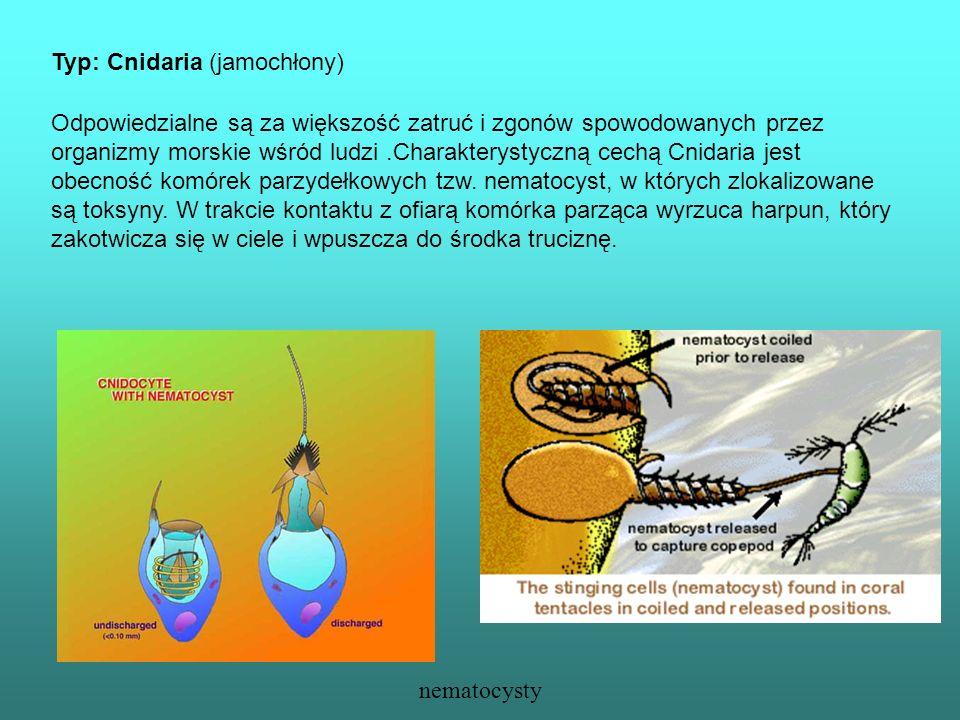 Typ: Cnidaria (jamochłony)