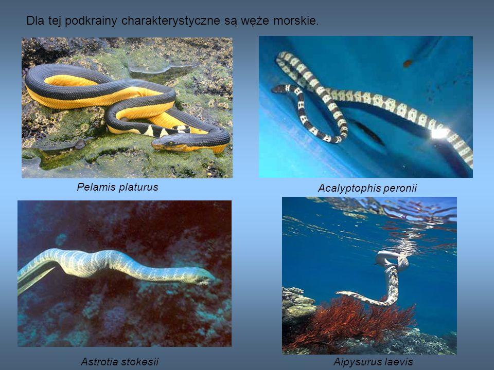 Dla tej podkrainy charakterystyczne są węże morskie.