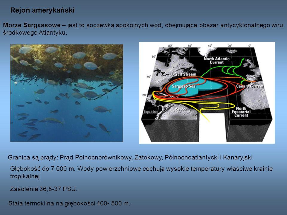 Rejon amerykański Morze Sargassowe – jest to soczewka spokojnych wód, obejmująca obszar antycyklonalnego wiru.