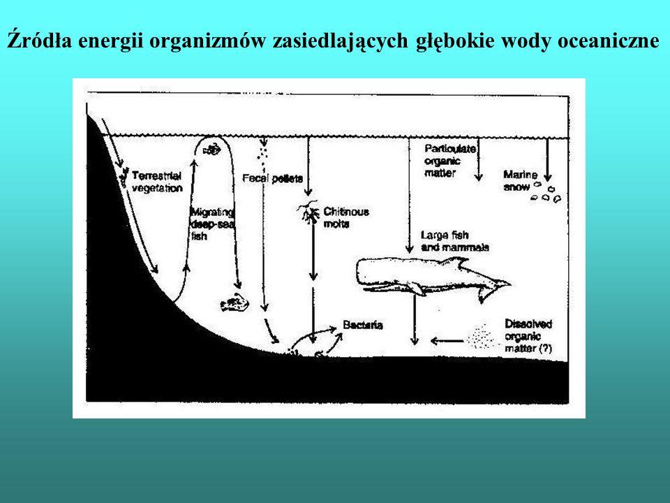 Źródła energii organizmów zasiedlających głębokie wody oceaniczne