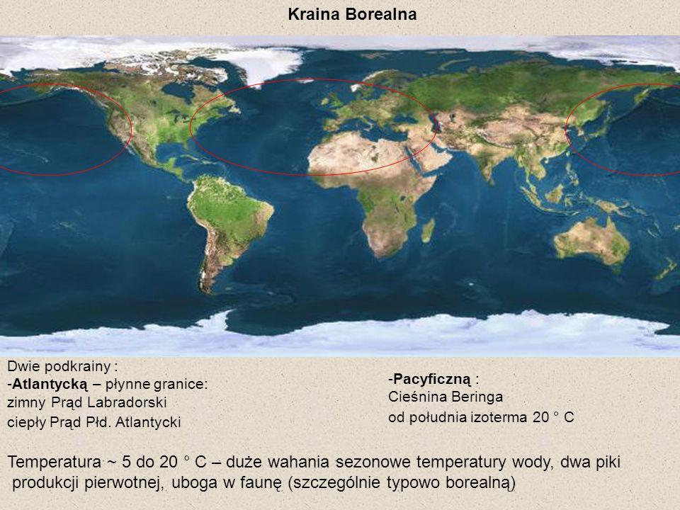 produkcji pierwotnej, uboga w faunę (szczególnie typowo borealną)