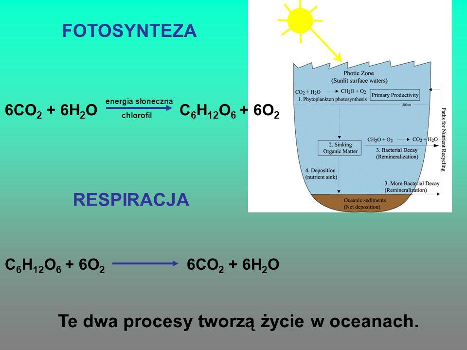 Te dwa procesy tworzą życie w oceanach.