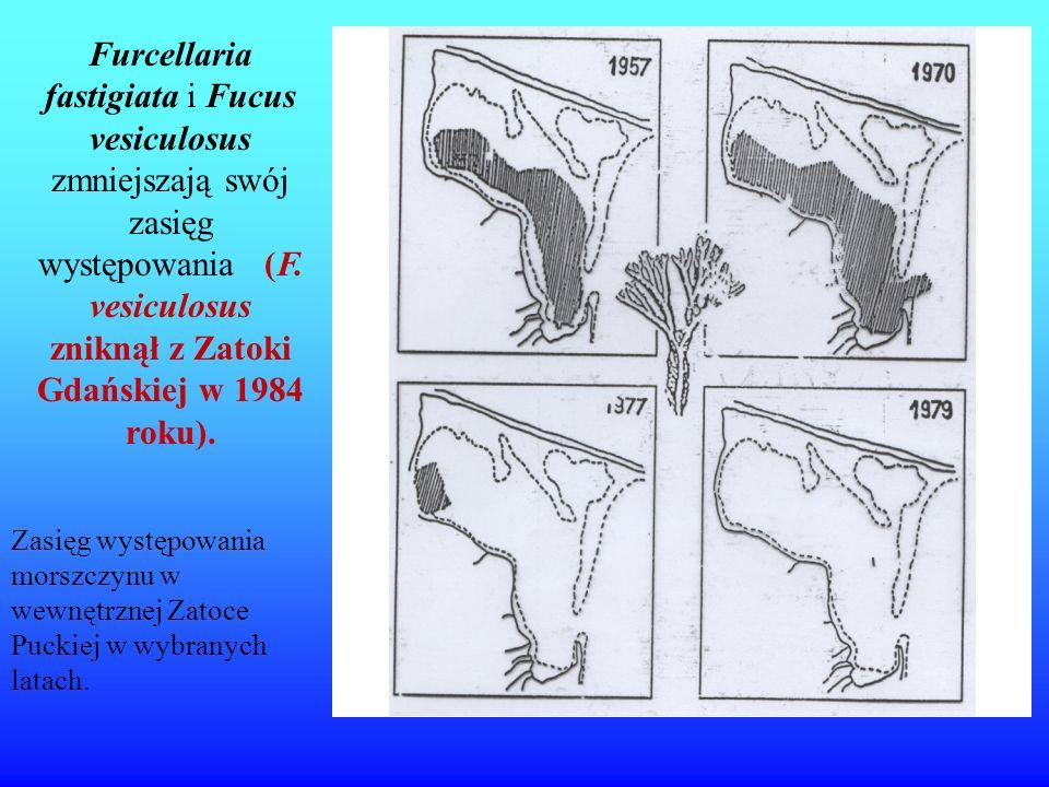 Furcellaria fastigiata i Fucus vesiculosus zmniejszają swój zasięg występowania (F. vesiculosus zniknął z Zatoki Gdańskiej w 1984 roku).