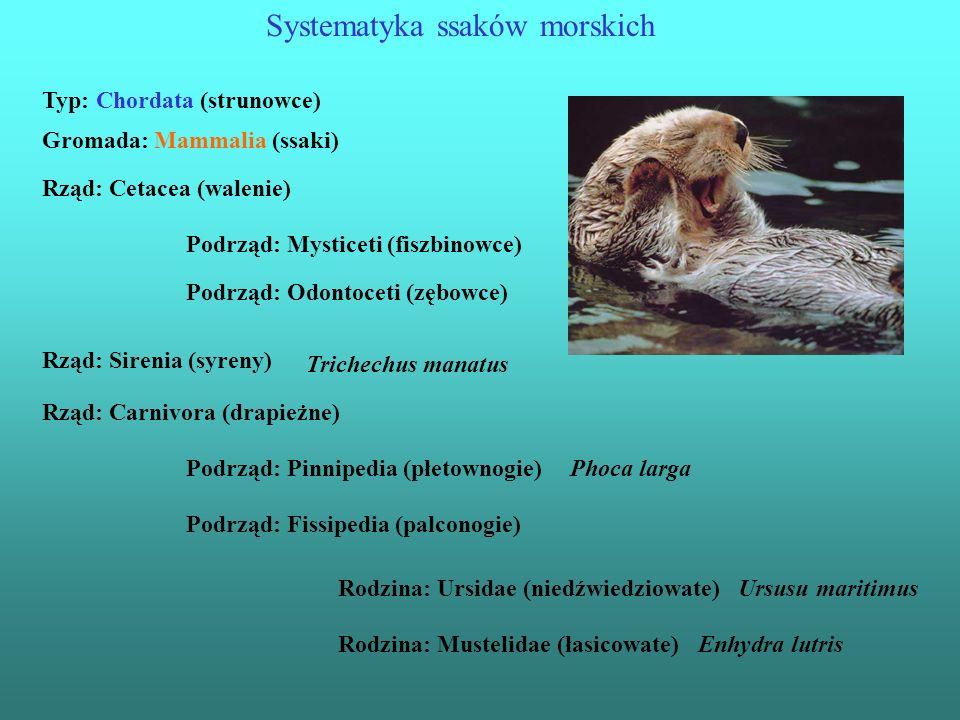 Systematyka ssaków morskich