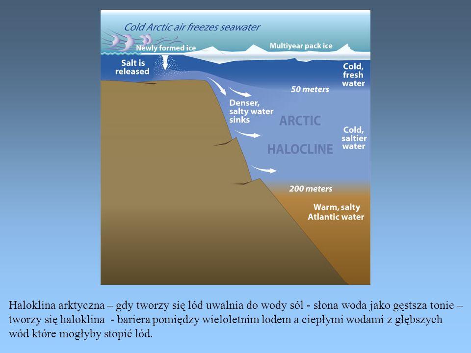 Haloklina arktyczna – gdy tworzy się lód uwalnia do wody sól - słona woda jako gęstsza tonie –