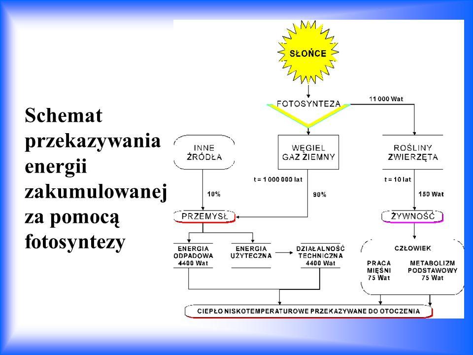 Schemat przekazywania energii zakumulowanej za pomocą fotosyntezy