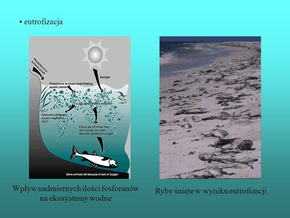 Wpływ nadmiernych ilości fosforanów