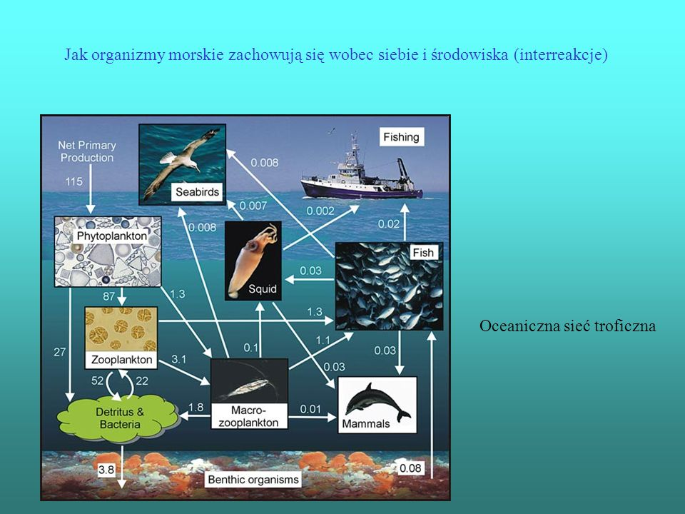 Jak organizmy morskie zachowują się wobec siebie i środowiska (interreakcje)