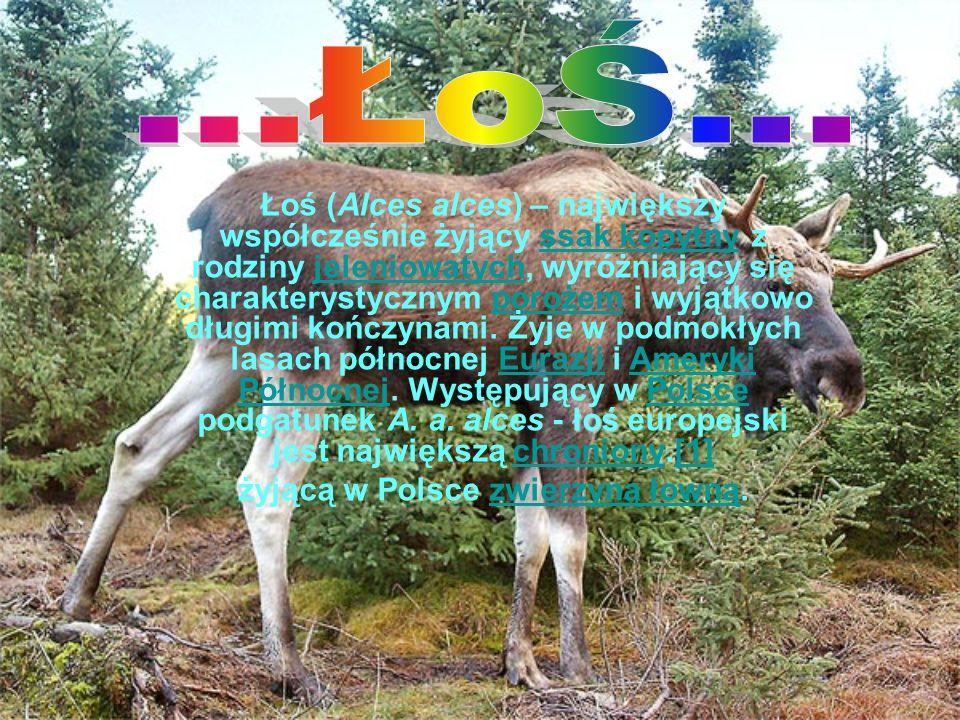 żyjącą w Polsce zwierzyną łowną.