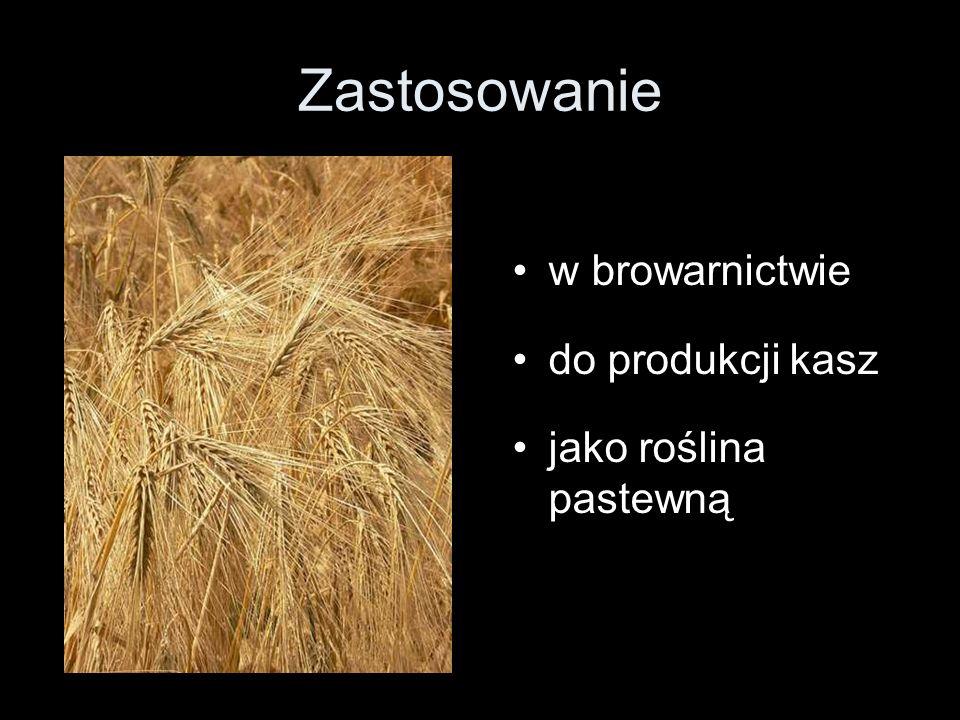 Zastosowanie w browarnictwie do produkcji kasz jako roślina pastewną