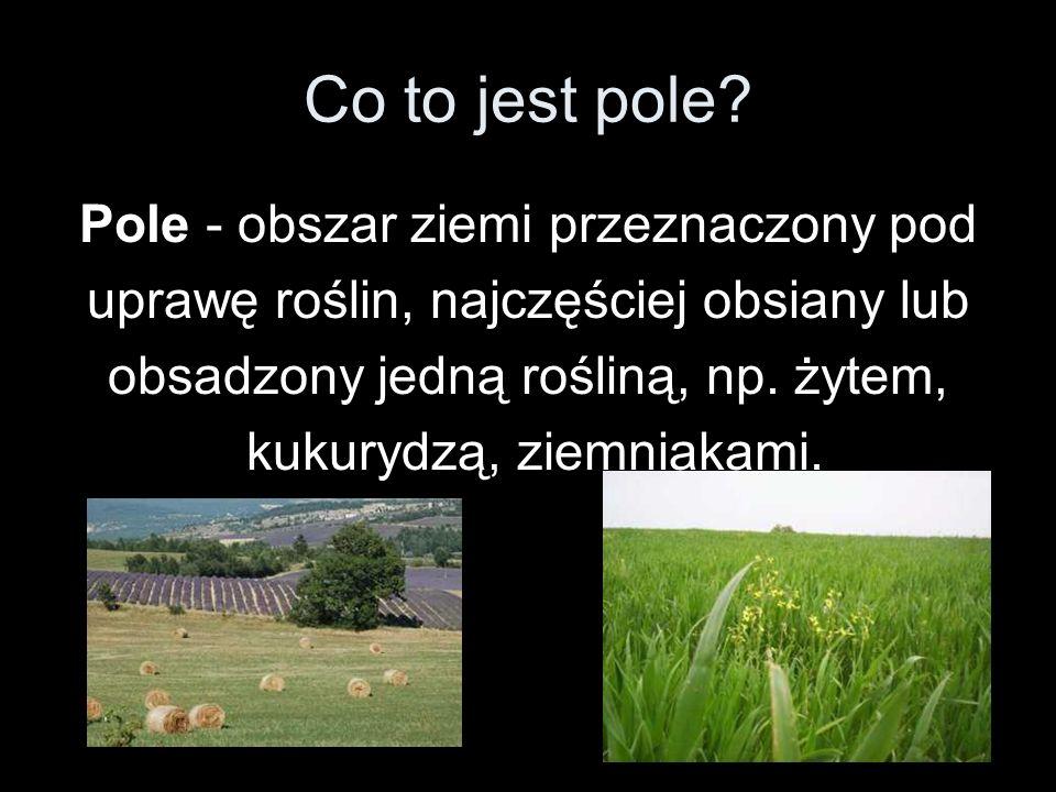 Co to jest pole Pole - obszar ziemi przeznaczony pod