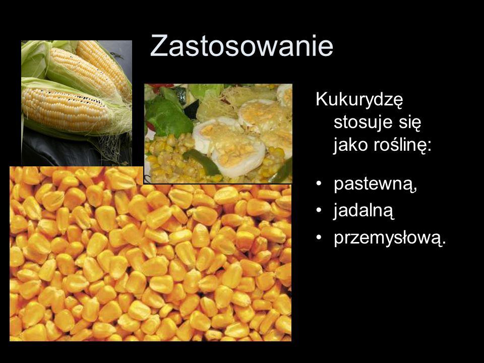 Zastosowanie Kukurydzę stosuje się jako roślinę: pastewną, jadalną