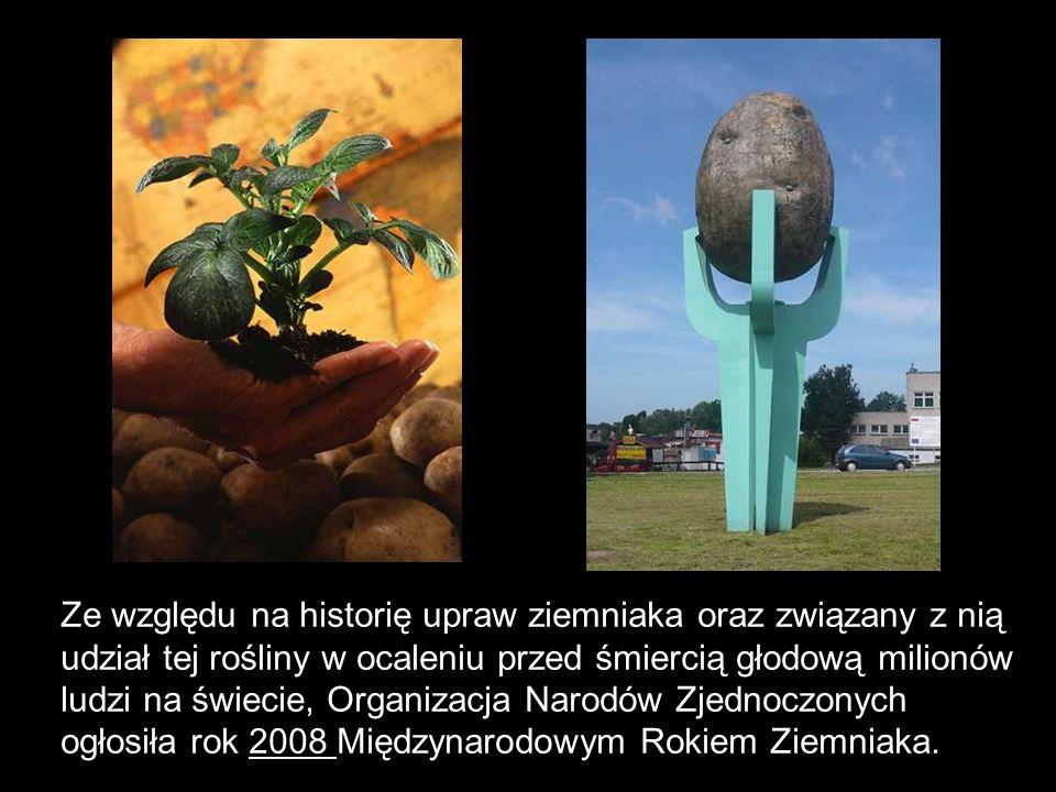 Ze względu na historię upraw ziemniaka oraz związany z nią udział tej rośliny w ocaleniu przed śmiercią głodową milionów ludzi na świecie, Organizacja Narodów Zjednoczonych ogłosiła rok 2008 Międzynarodowym Rokiem Ziemniaka.