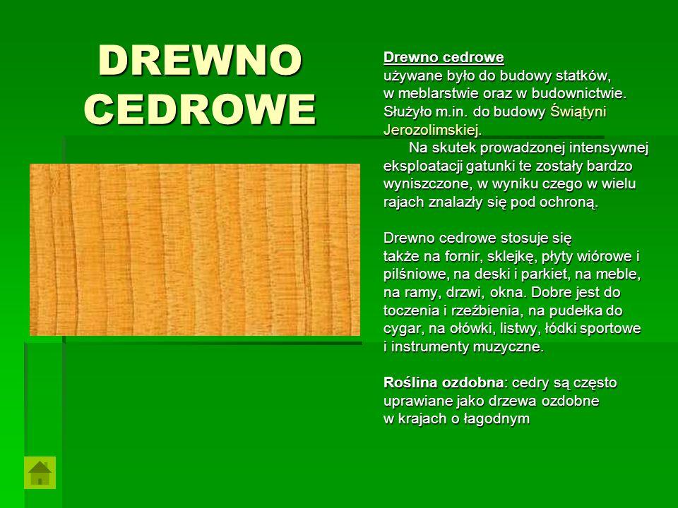 DREWNO CEDROWE Drewno cedrowe używane było do budowy statków,