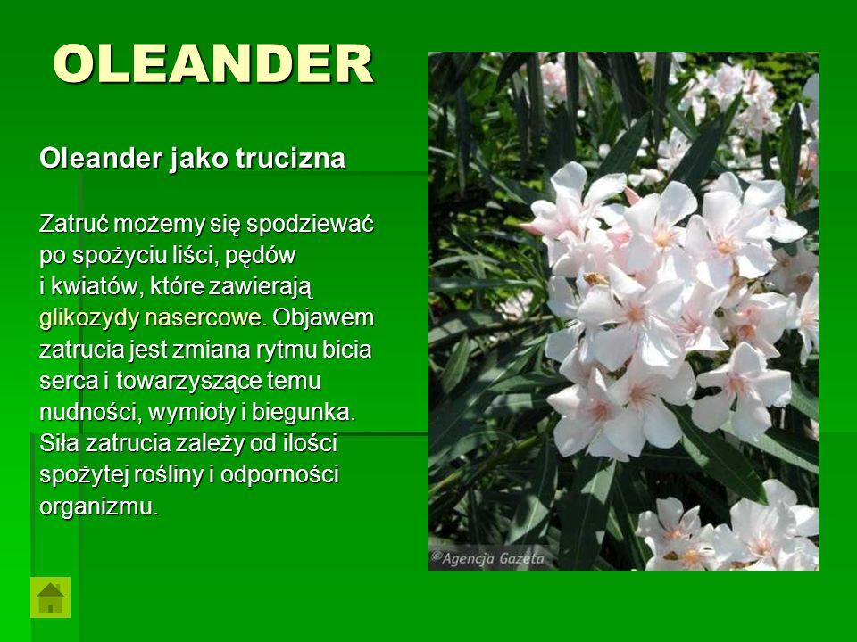 OLEANDER Oleander jako trucizna Zatruć możemy się spodziewać