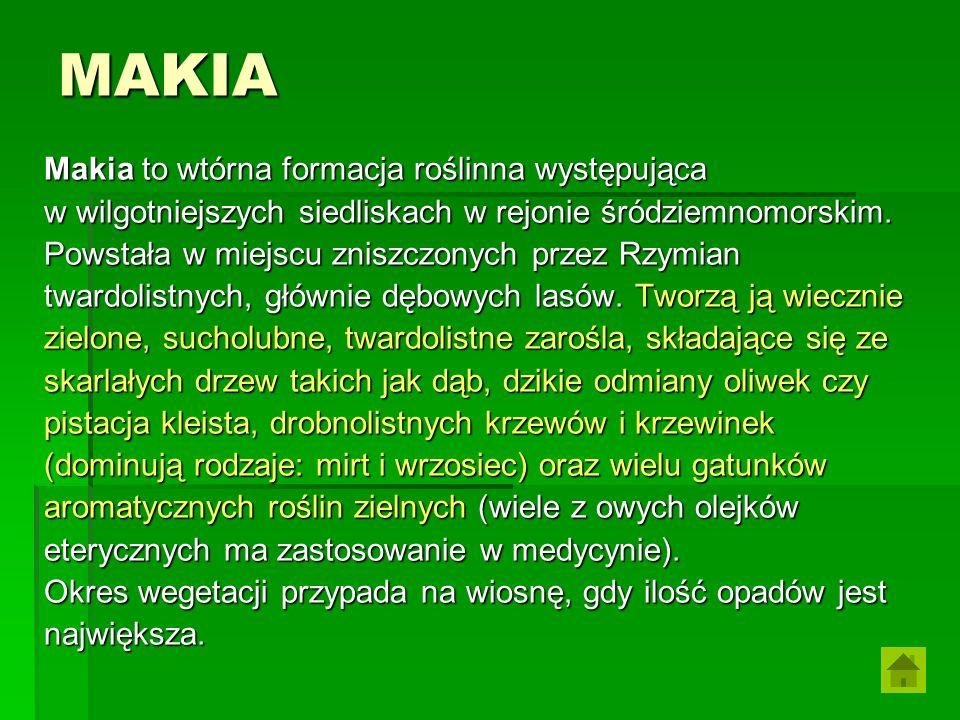 MAKIA Makia to wtórna formacja roślinna występująca