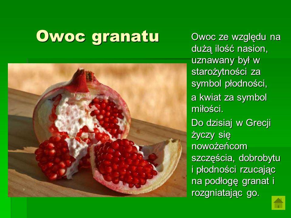 Owoc ze względu na dużą ilość nasion, uznawany był w starożytności za symbol płodności,