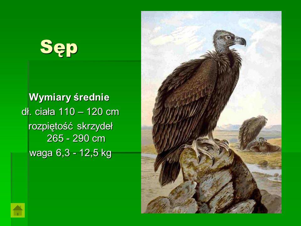 rozpiętość skrzydeł 265 - 290 cm