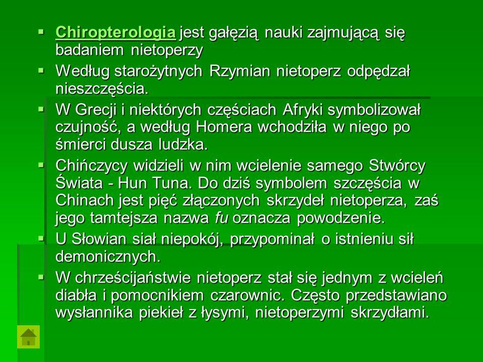 Chiropterologia jest gałęzią nauki zajmującą się badaniem nietoperzy