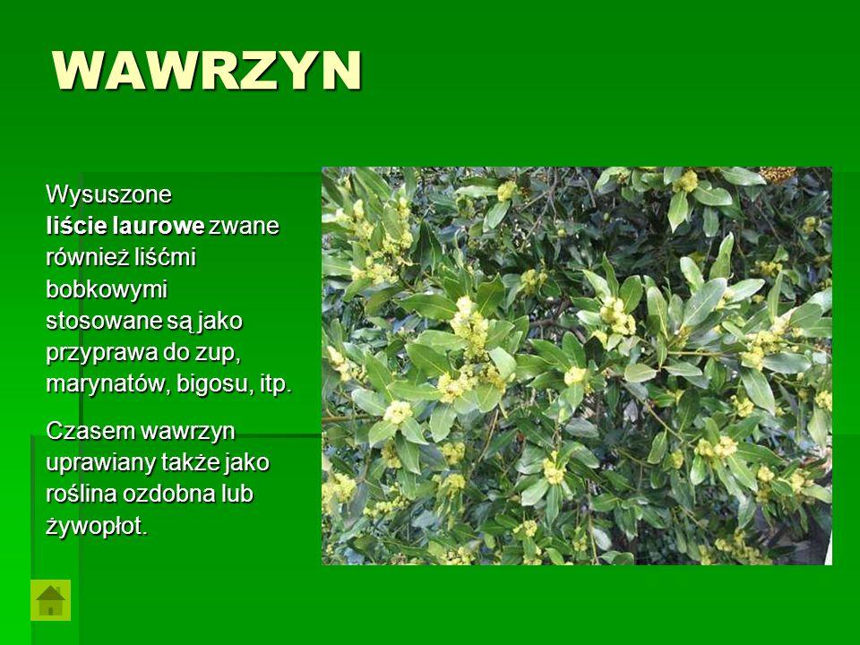 WAWRZYN Wysuszone liście laurowe zwane również liśćmi bobkowymi