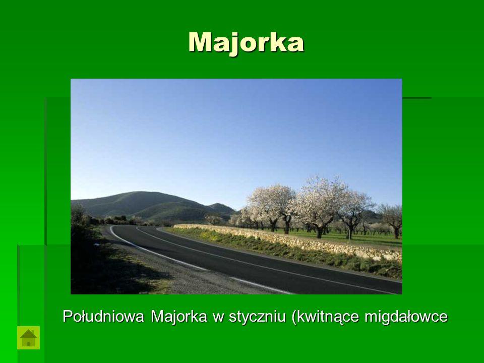 Majorka Południowa Majorka w styczniu (kwitnące migdałowce