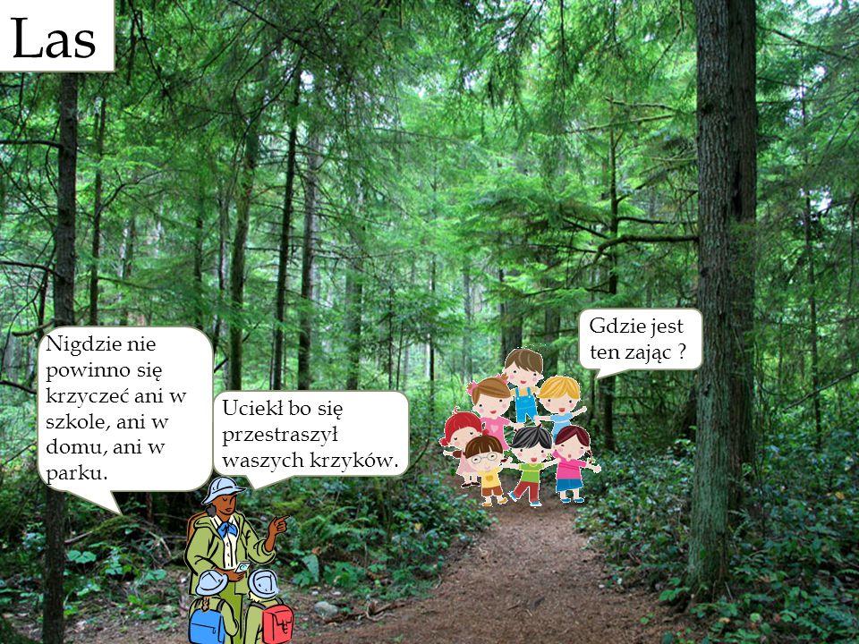 Las Gdzie jest ten zając