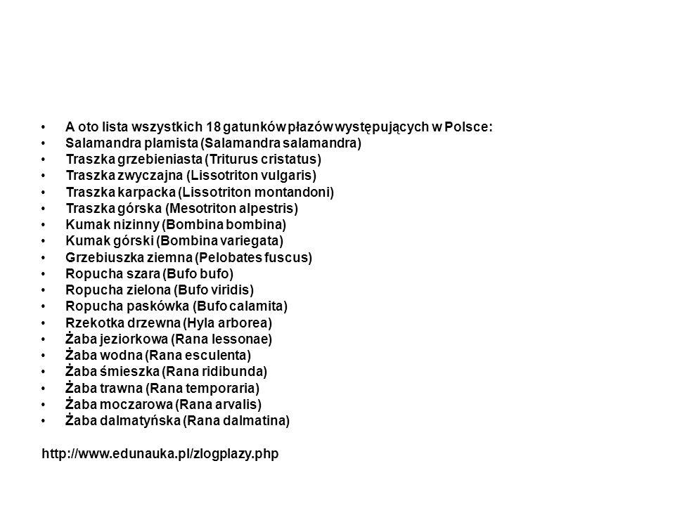 A oto lista wszystkich 18 gatunków płazów występujących w Polsce: