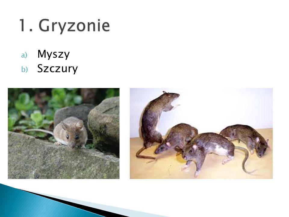 1. Gryzonie Myszy Szczury