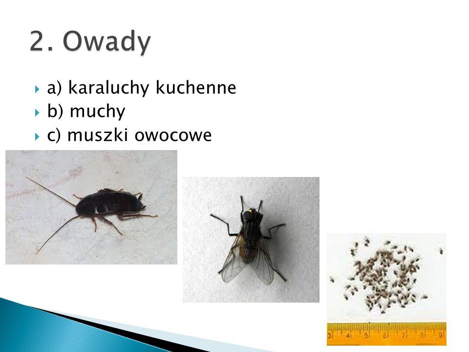 2. Owady a) karaluchy kuchenne b) muchy c) muszki owocowe