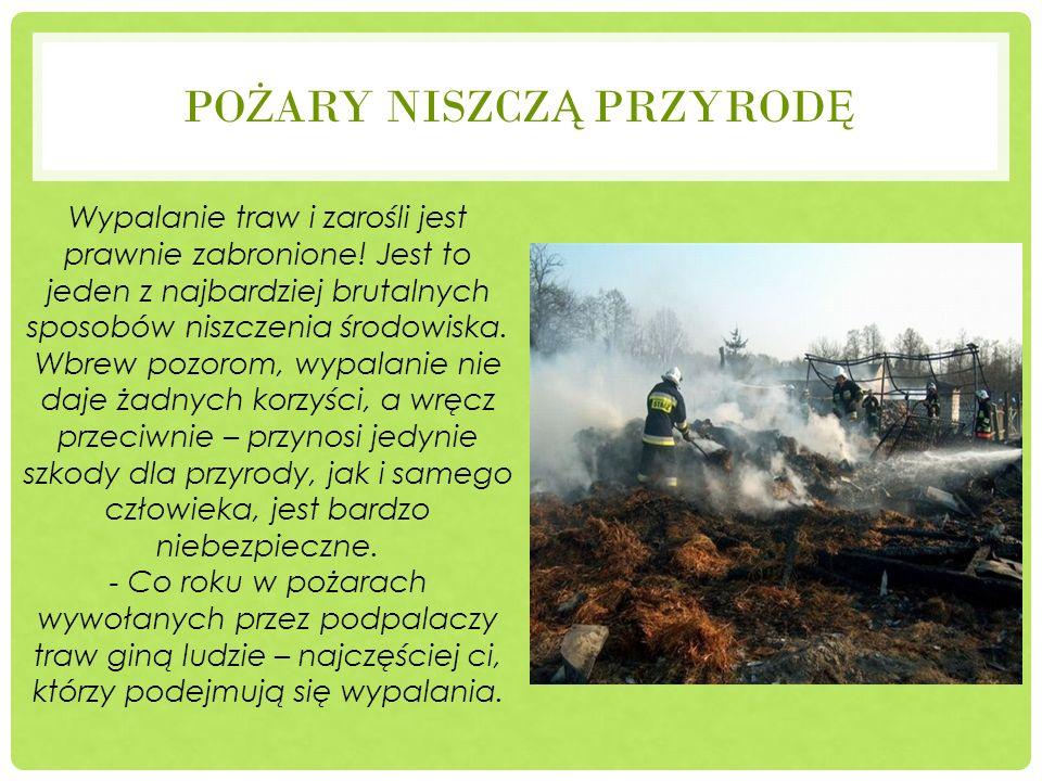 Pożary niszczą przyrodę