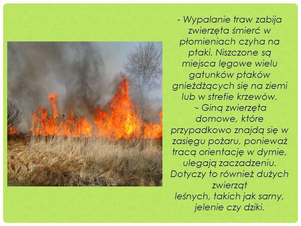 - Wypalanie traw zabija zwierzęta śmierć w płomieniach czyha na ptaki