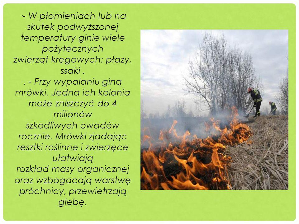 ·- W płomieniach lub na skutek podwyższonej temperatury ginie wiele pożytecznych zwierząt kręgowych: płazy, ssaki .