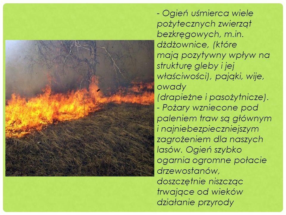 - Ogień uśmierca wiele pożytecznych zwierząt bezkręgowych, m. in