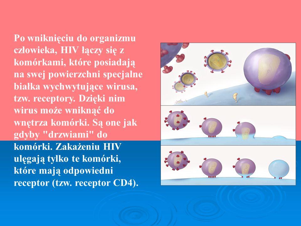 Po wniknięciu do organizmu człowieka, HIV łączy się z komórkami, które posiadają na swej powierzchni specjalne białka wychwytujące wirusa, tzw.