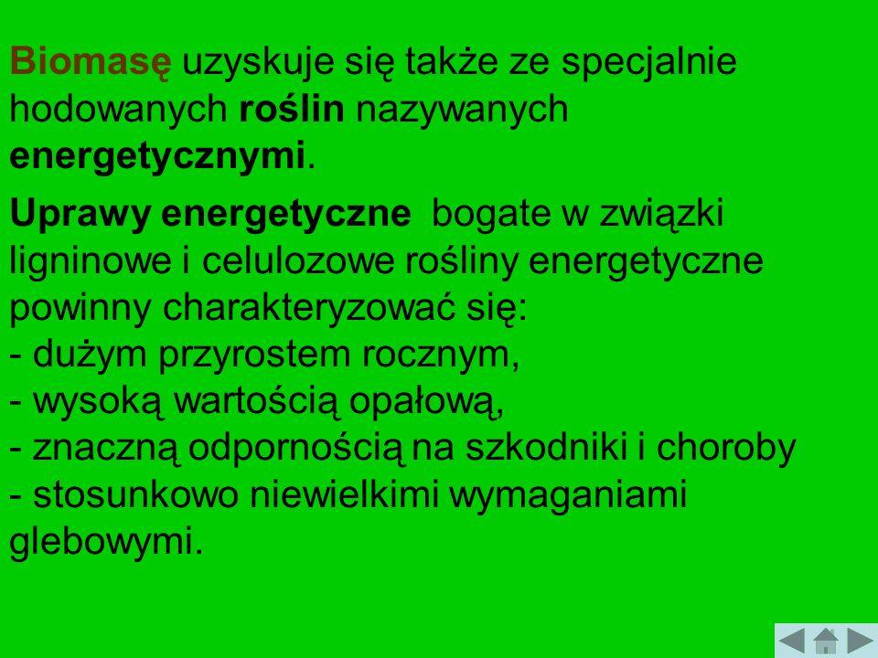 Biomasę uzyskuje się także ze specjalnie hodowanych roślin nazywanych energetycznymi.