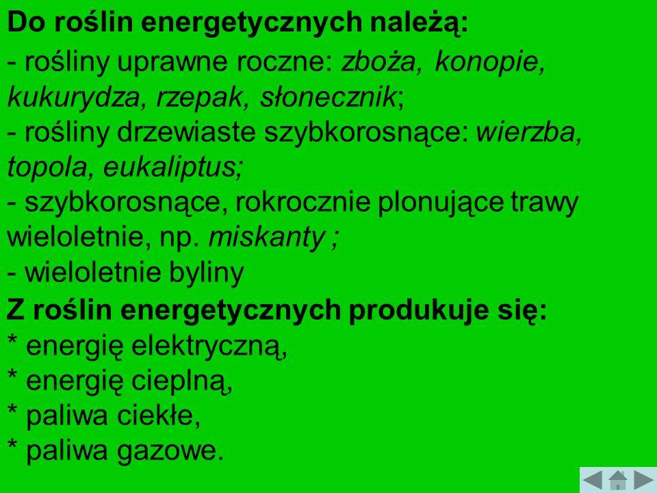 Do roślin energetycznych należą: