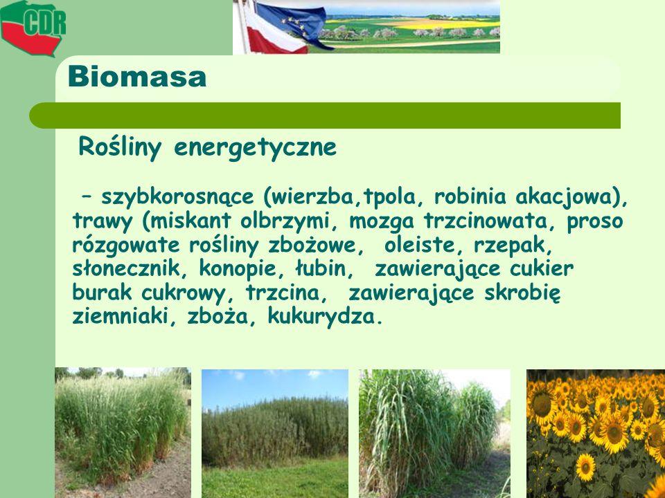 Biomasa Rośliny energetyczne.