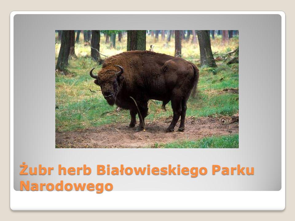 Żubr herb Białowieskiego Parku Narodowego