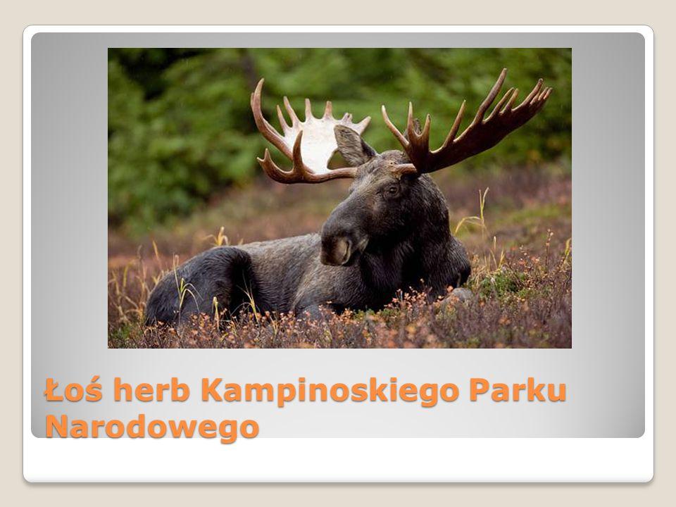 Łoś herb Kampinoskiego Parku Narodowego