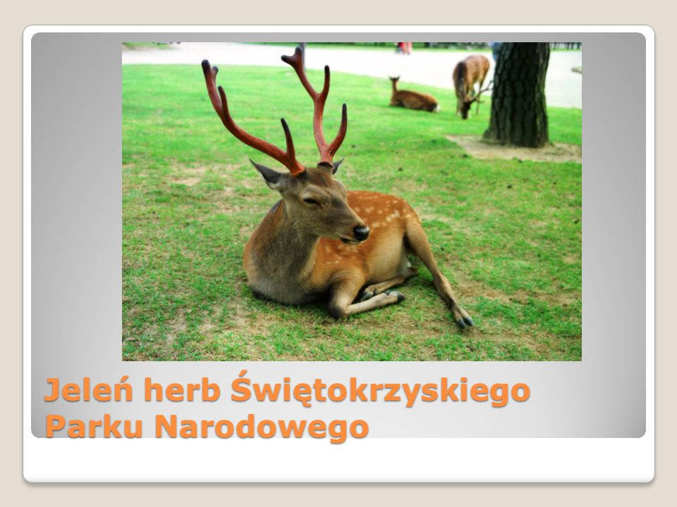 Jeleń herb Świętokrzyskiego Parku Narodowego
