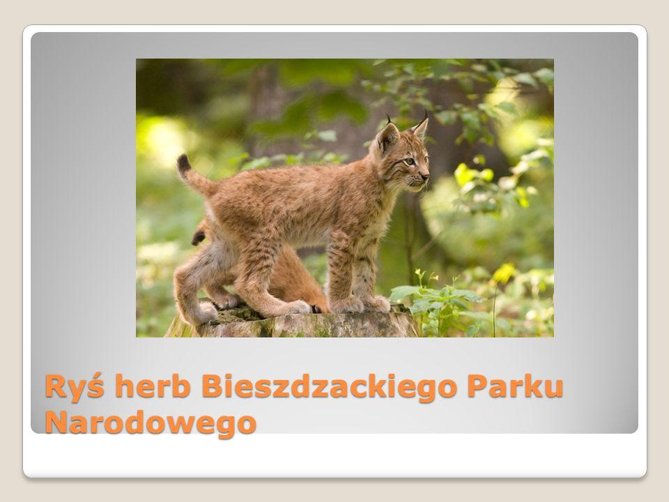 Ryś herb Bieszdzackiego Parku Narodowego