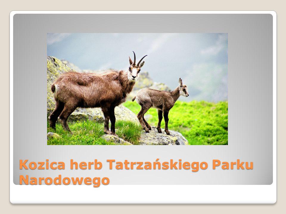 Kozica herb Tatrzańskiego Parku Narodowego