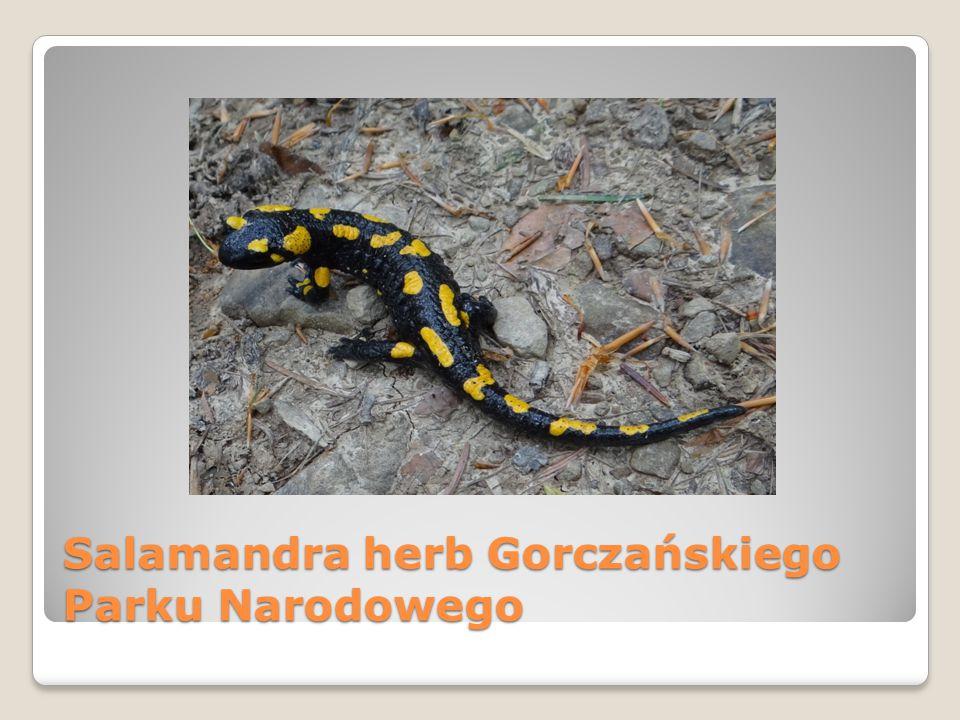Salamandra herb Gorczańskiego Parku Narodowego