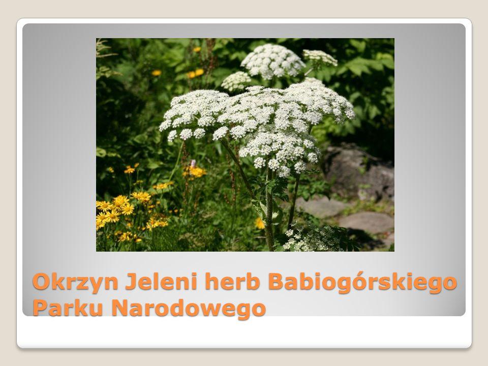 Okrzyn Jeleni herb Babiogórskiego Parku Narodowego